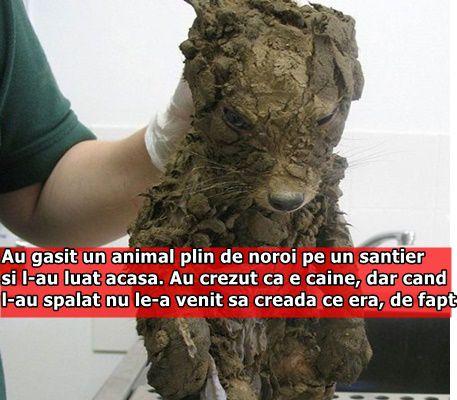 Au gasit un animal plin de noroi pe un santier si l-au luat acasa. Au crezut ca e caine, dar cand l-au spalat nu le-a venit sa creada ce era, de fapt