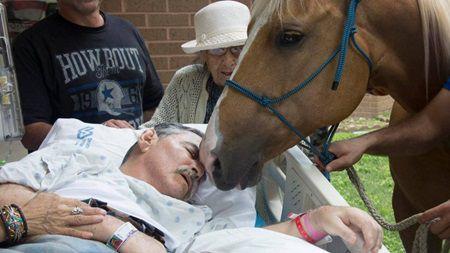 Era pe moarte si a cerut sa-i aduca un cal. Cand animalul l-a atins, ceva incredibil s-a intamplat
