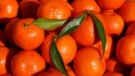 Secretul clementinelor din supermarketuri