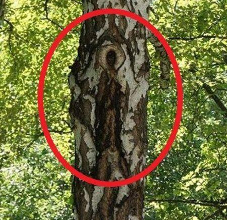 """Imaginea Fecioarei Maria a aparut pe scoarta unui copac. """"E o minune dumnezeiasca!"""""""