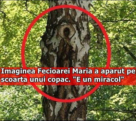 """Imaginea Fecioarei Maria a aparut pe scoarta unui copac. """"E un miracol"""""""