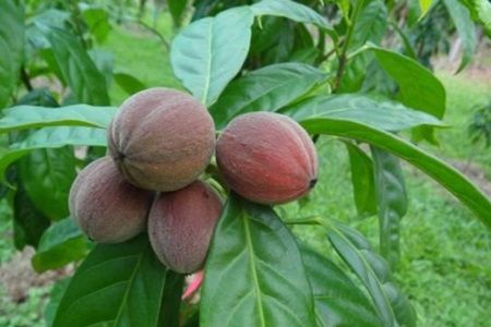 Este nebunie? Aceste fructe ucide cancerul în termen de 1 minut!
