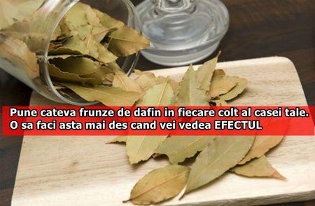 Pune cateva frunze de dafin in fiecare colt al casei tale. O sa faci asta mai des cand vei vedea EFECTUL