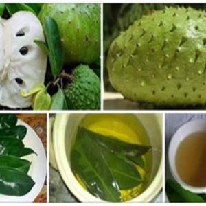 Frunzele acestui fruct sunt de 1000 de ori mai eficiente ca chimioterapia. Ucide pe loc celulele canceroase