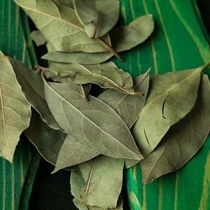 Frunzele de dafin, medicament ieftin pentru tratamentul diabetului si a bolilor articulare