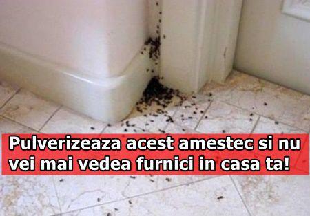 Pulverizeaza acest amestec si nu vei mai vedea furnici in casa ta!