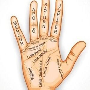 Ce loc de munca este potrivit pentru tine in functie de liniile mainii?