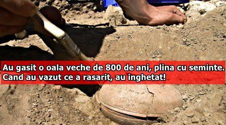 Au gasit o oala veche de 800 de ani, plina cu seminte. Cand au vazut ce a rasarit, au inghetat!
