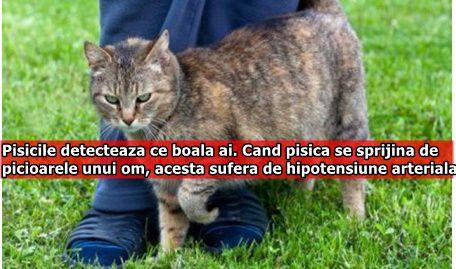 Pisicile detecteaza ce boala ai. Cand pisica se sprijina de picioarele unui om, acesta sufera de hipotensiune arteriala