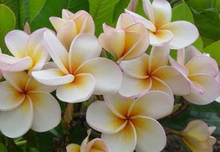 Plante care aduc dragoste si noroc in casa