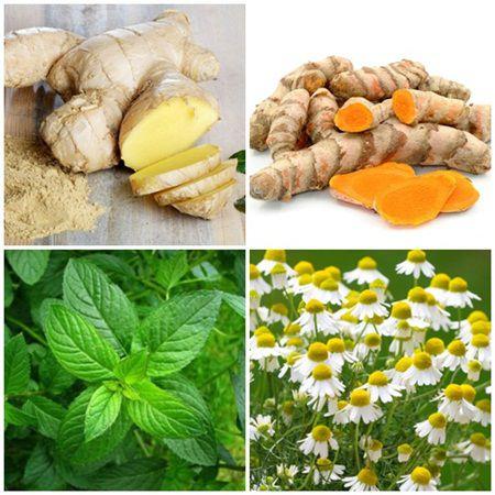 plante8 Plante medicinale care au efect anti cancer