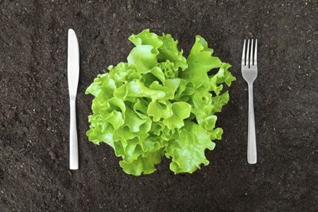 salata1 5 motive pentru a manca salata verde