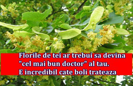 "Florile de tei ar trebui sa devina ""cel mai bun doctor"" al tau. E incredibil cate boli trateaza"