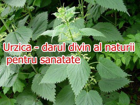 Urzica - darul divin al naturii pentru sanatate